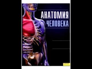 Полный экскурс по анатомии человека.