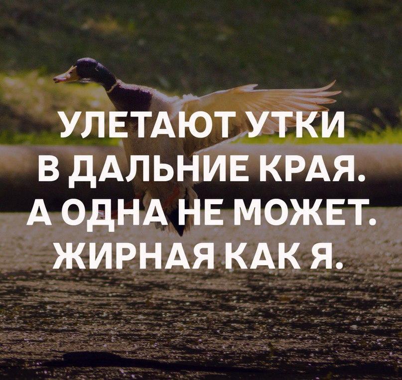 улетают утки в теплые края картинки прикольные встречи могли привлечь