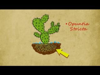 Профессор Почемушкин - Познавательный мультфильм для детей  Откуда кактусы берут воду в пустыне