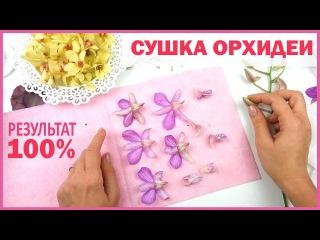 ЮВЕЛИРНАЯ СМОЛА! Как сушить орхидею? ❤ ГЕРБАРИЙ