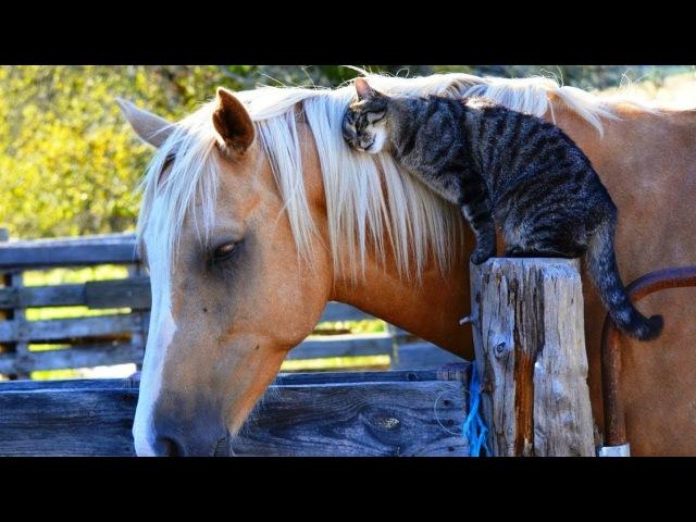 Картинка коня с надписью конь
