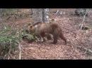 Parco Abruzzo 365 giorni ripresi da telecamera nascosta tra fagg