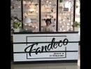 Открытие Fandeco