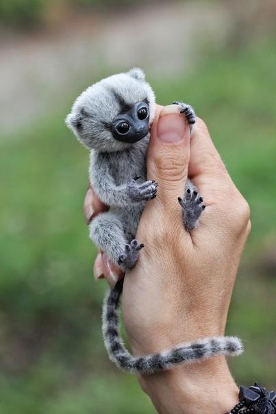 самая маленькая обезьянка гифка нашем сайте