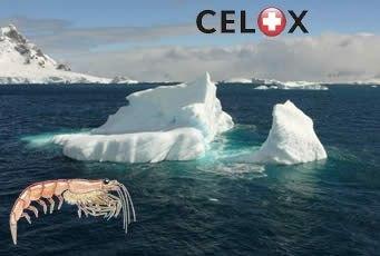 Кровоостанавливающее средство Celox: Полное руководство по применению, изображение №5