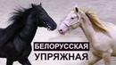 Чубук и Навигатор Белорусская упряжная лошадь Ринг АтлантыКонногоМира ИППОсфера 2018 HIPPOsphere