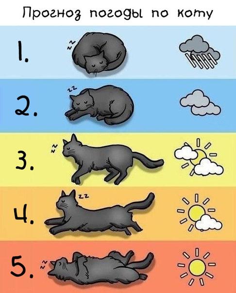 повесть картинка определение погоды по коту все хочется жизни