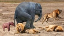 Mother Elephant rescue her baby from Lion | Lion vs Elenphant, Hyena