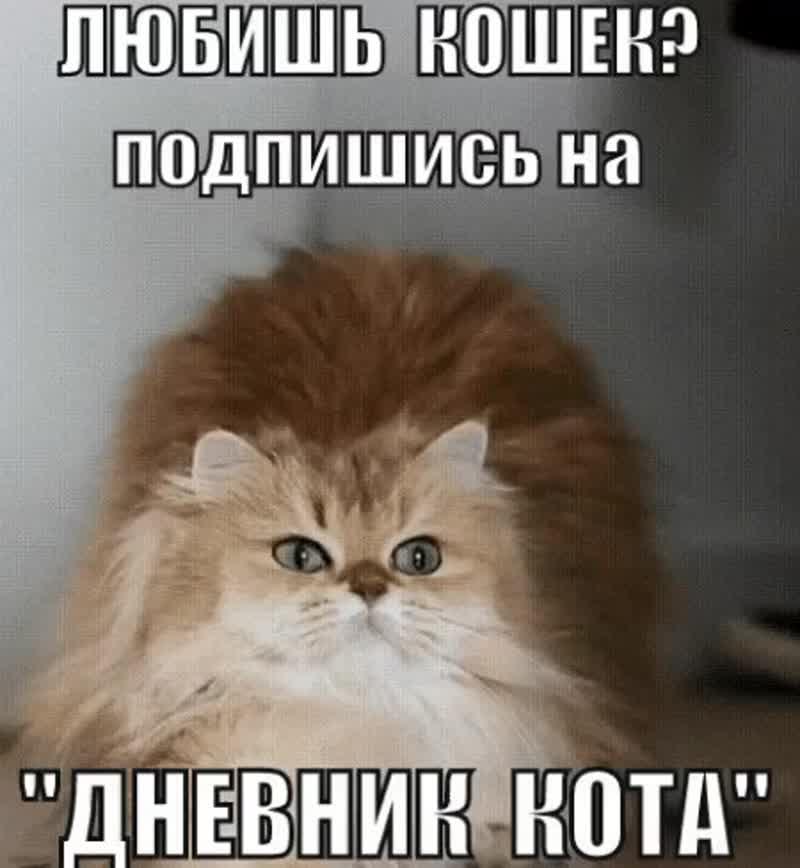 ПОДПИШИСЬ на самое пушистое сообщество Дневник кота.mp4