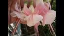 М.К. Фуксия из холодного фарфора (цветок). Авторский МК Татьяны Несиной