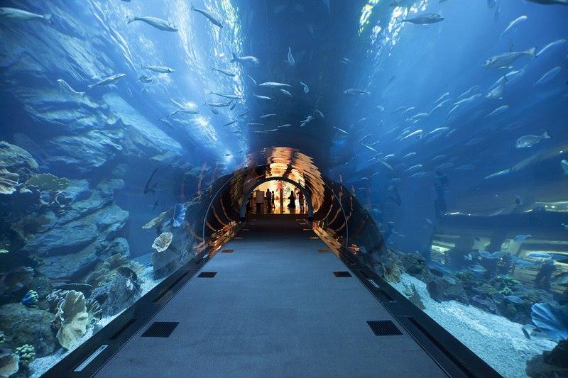 Крупнейший в мире аквариум в ТРЦ Дубай Молл, ОАЭ, изображение №2