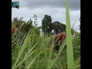 Строительство виллы глубоко в лесу