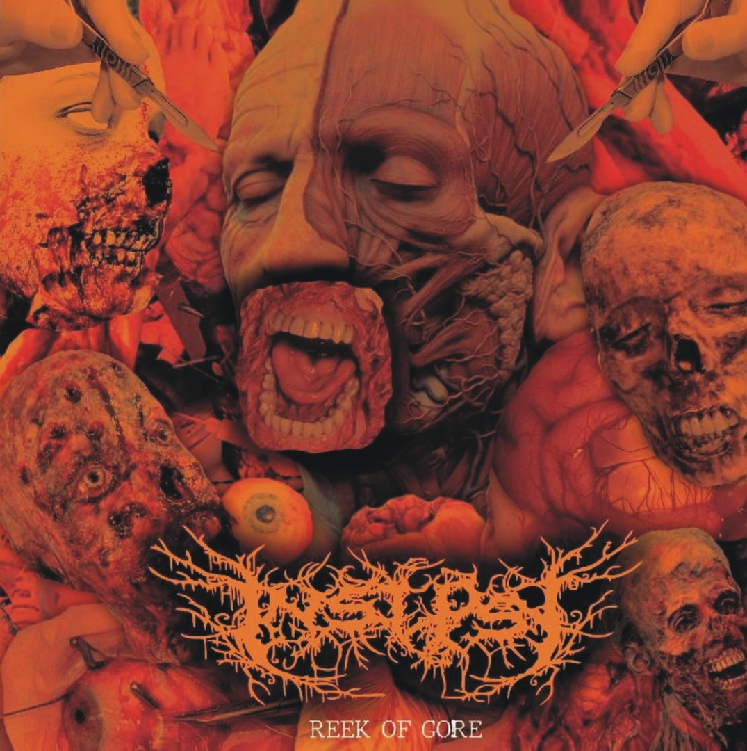 Insepsy - Reek Of Gore