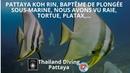 Pattaya koh rin, baptême de plongée sous-marine nous avons vu raie, tortue, platax avec Plongée Asie