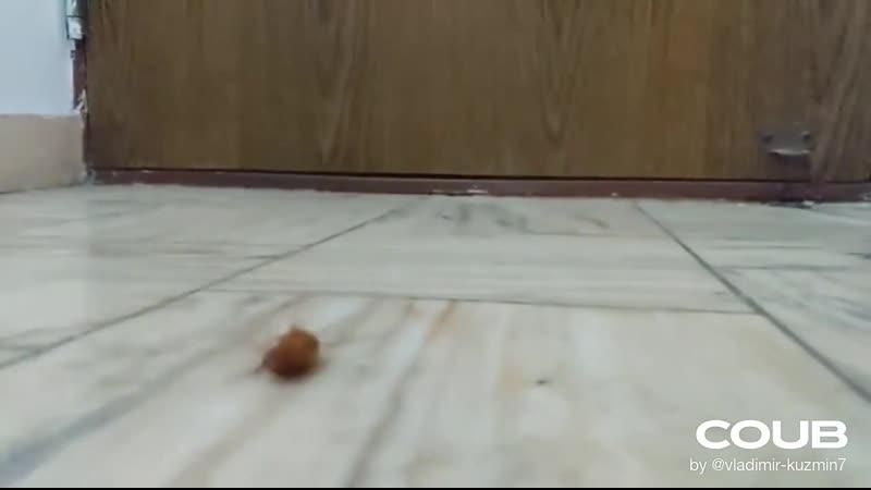 Ticklish bug