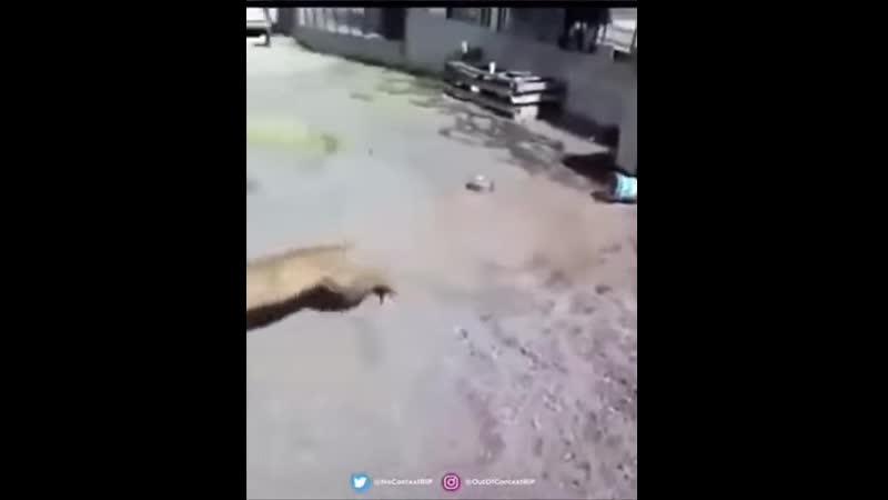 Подразнил собаку