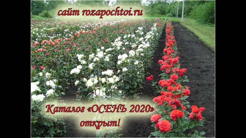 Каталог Осень 2020 открыт
