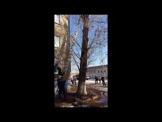 В Оренбурге спасатели сняли с дерева ребенка