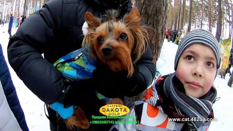 5 Winterdogfest Winter dog fest 2019 Песочин 10022019 собаки зимнии забавы