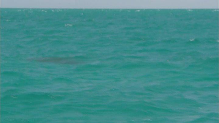 BBC Океаны 5 Индийский океан Познавательный природа путешествие 2008