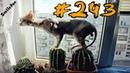 Смешные кошки 2019, приколы про котов до слез – Смешные коты и котики 2019 – Выпуск 243