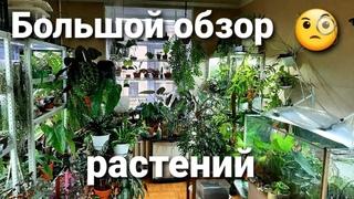 Большой обзор растений/ Мега обзор