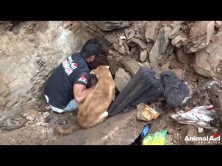 В Индии щенята оказались под завалами разрушенного дома