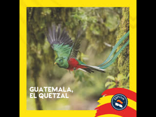 Guatemala, el quetzal