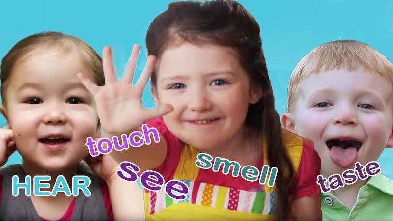 Five Senses | TreeSchoolers | Songs for Kids