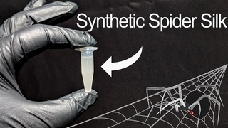 I Grew Real Spider Silk Using Yeast