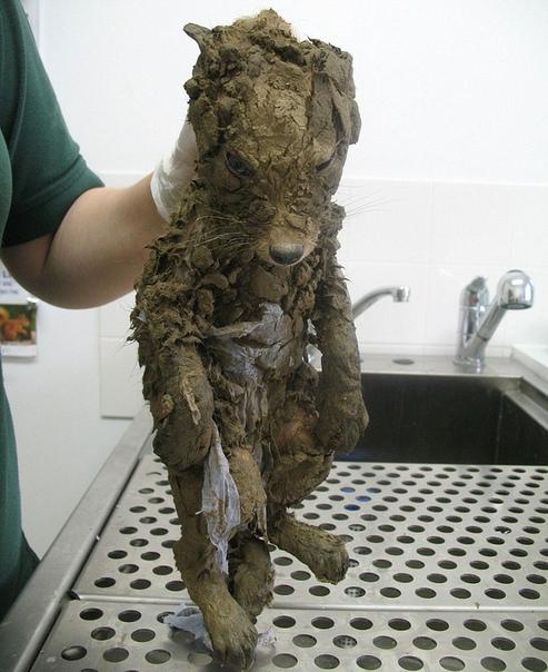 Когда нашел грязненького измученного щенка, а это оказалась лисичка Даже ветеринары-спасатели никогда не видели ничего подобного! Это бедное животное неопознанного рода и племени, полностью
