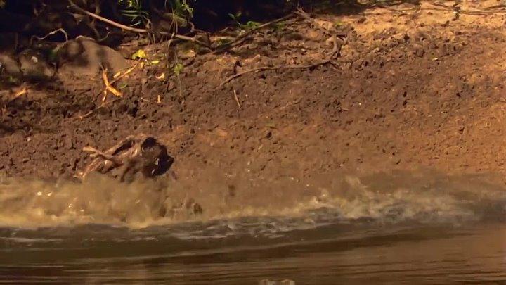 BBC Планета Земля Пресная вода 3