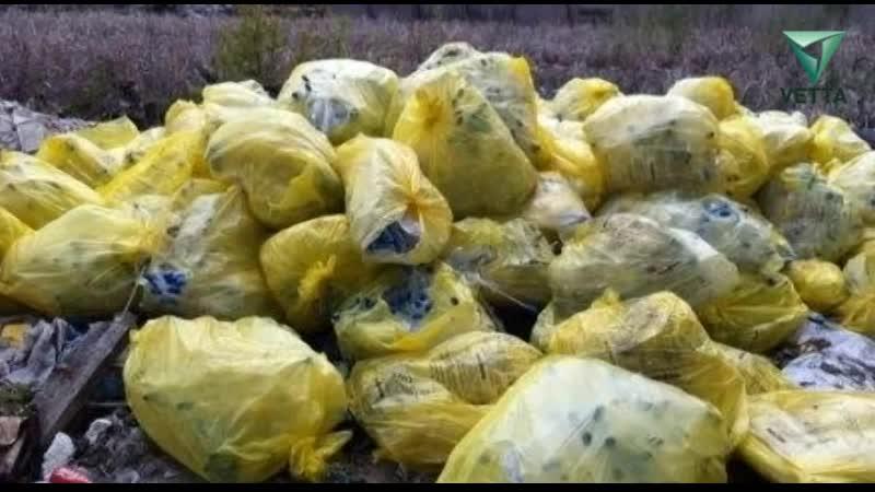 Большинство медицинских отходов в Прикамье утилизируется с нарушениями
