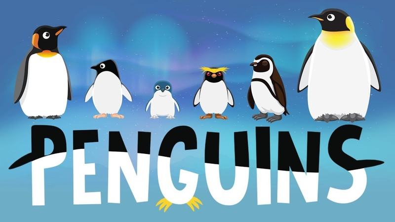 Penguins for Kids Interesting Facts - Different Types of Penguins for Children