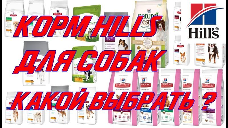 Hill`s. Какой корм выбрать для собаки?