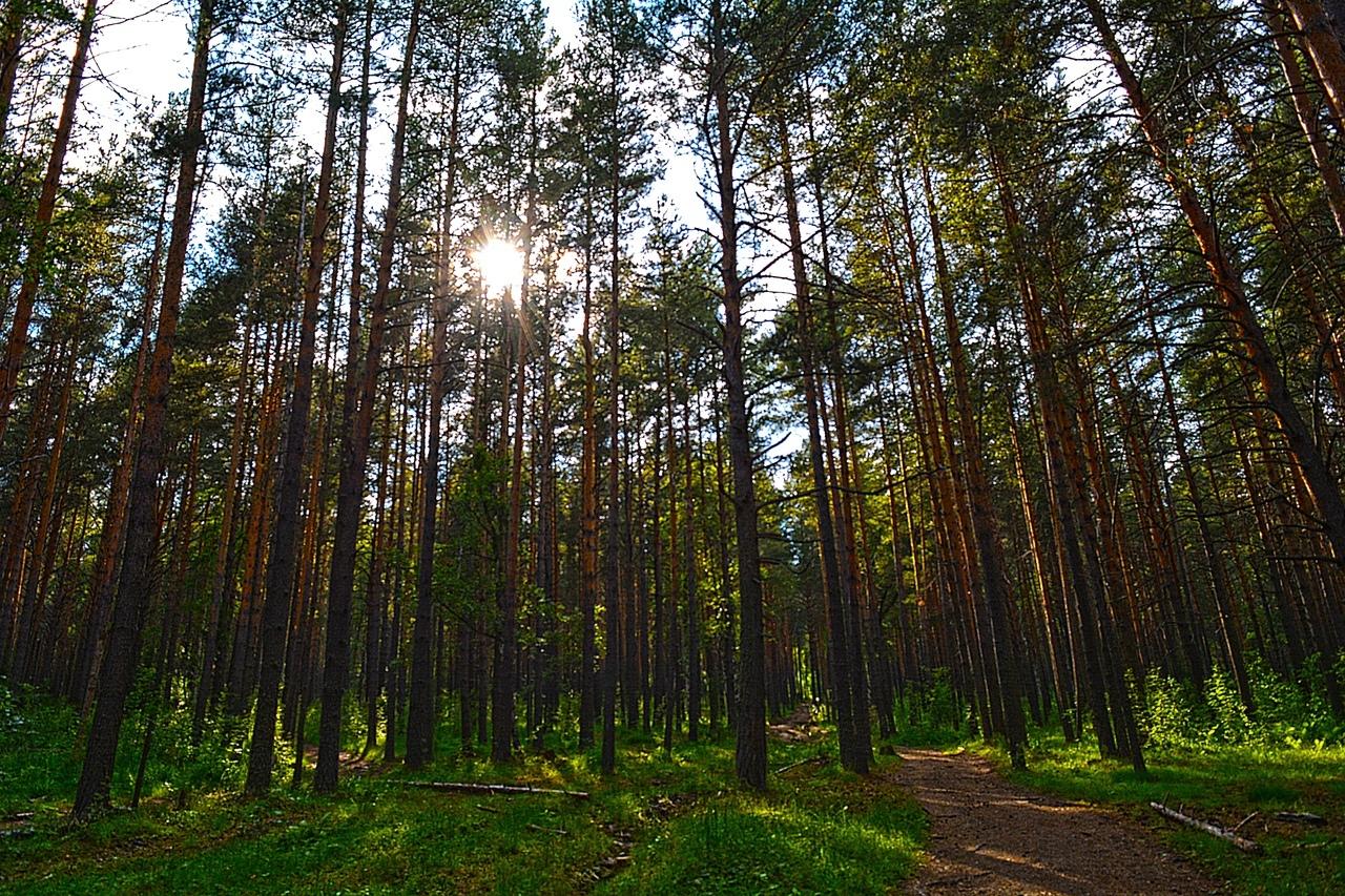 Солнце опустилось ниже деревьев — надо было спешить с восхождением.