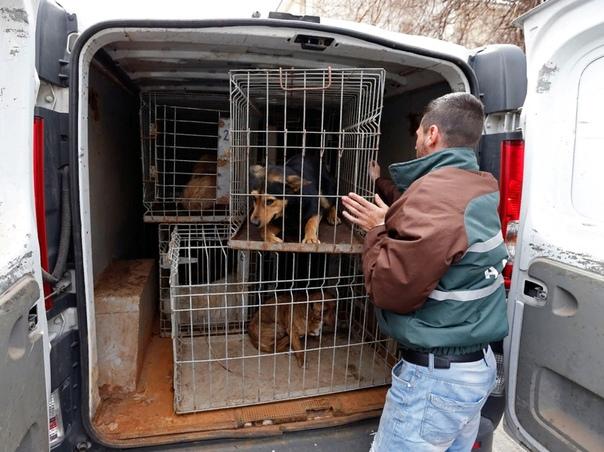 Отлов бродячих собак: польза или вред