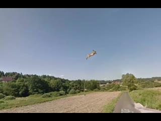 Машина Google Street View, которая делает снимки для Google-карт, сфотографировала как сама сбила кролика