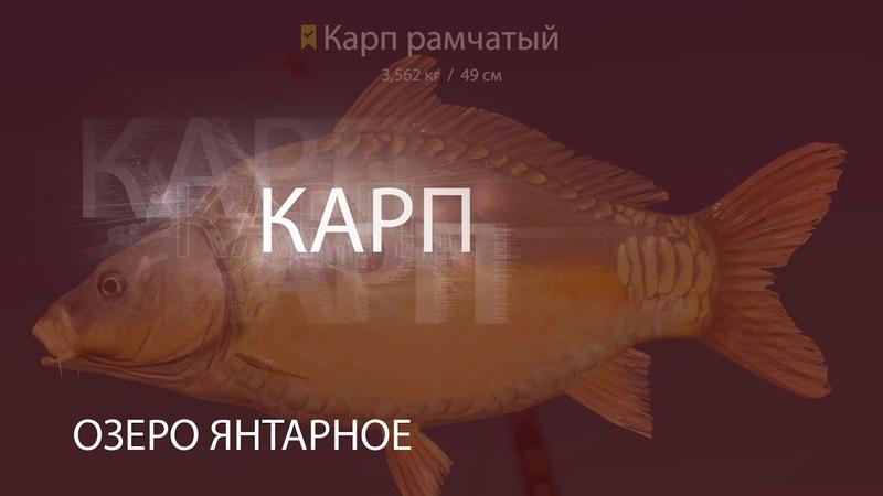 Русская рыбалка 4 РР4 RF4 Озеро Янтарное Карп