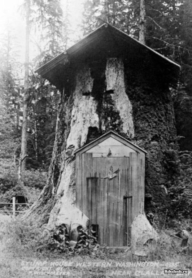 Дома-пни американских переселенцев XIX века