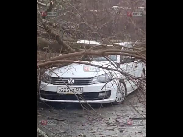 В Сочи упавшее дерево придавило автомобиль
