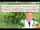 22 рецепта лечения листьями хрена суставов, радикулита, остеохондроза