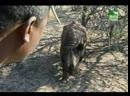Заповедник в дебрях Африки / Animal Park, Wild in Africa - 2006 - BBC (episode 10)