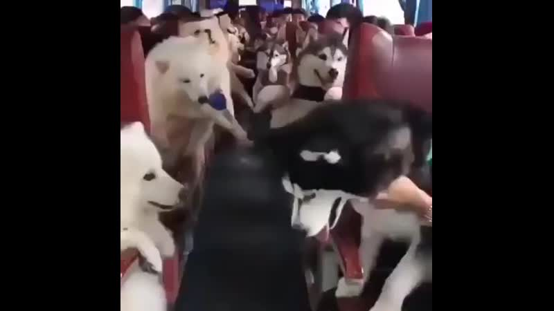 The-fluff-bus.mp4