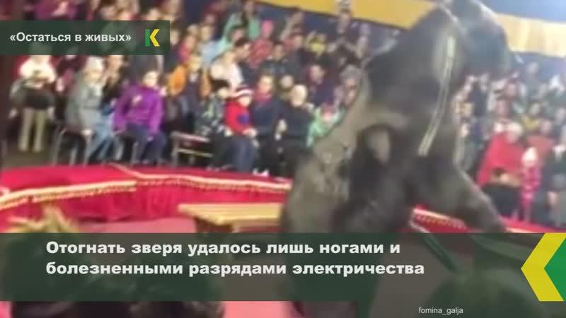Во время представления цирка-шапито «Аншлаг» огромный медведь атаковал дрессировщика