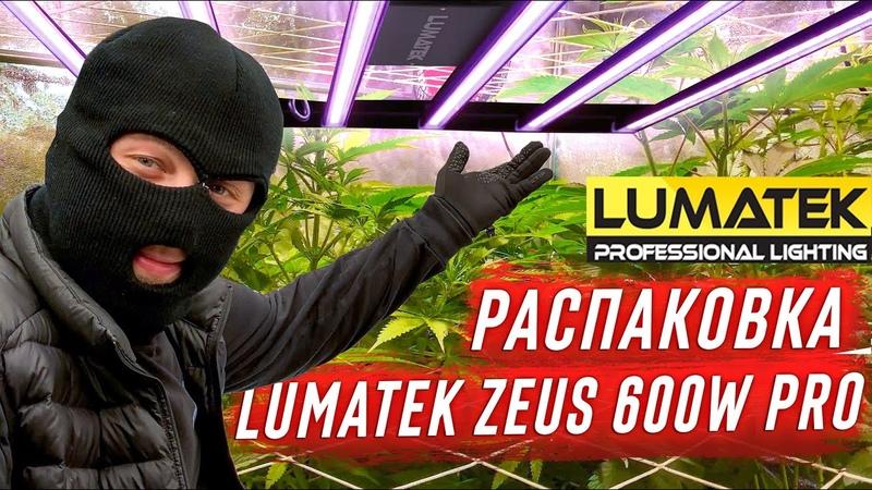Lumatek Zeus 600W Pro и Мой гроубокс