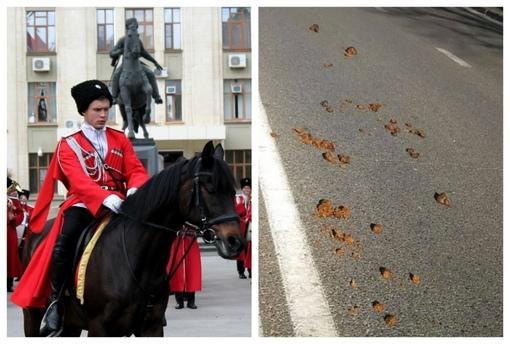 «Они считают себя выше остальных»: навоз лошадей казаков надоел краснодарцам
