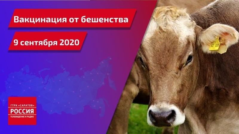 Вакцинация домашних животных от бешенства