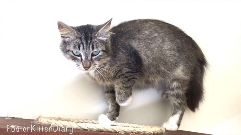 Rescue Pregnant Cat with Happy Ending will Warm Your Hearth