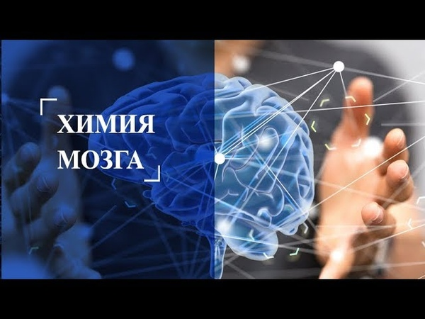 Химия мозга Нейропластичность мозга